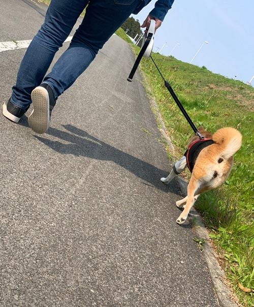 自粛散歩d.jpg