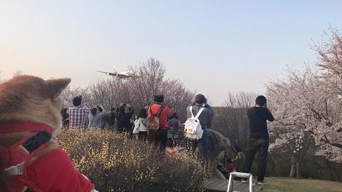 飛行機と1f.jpg